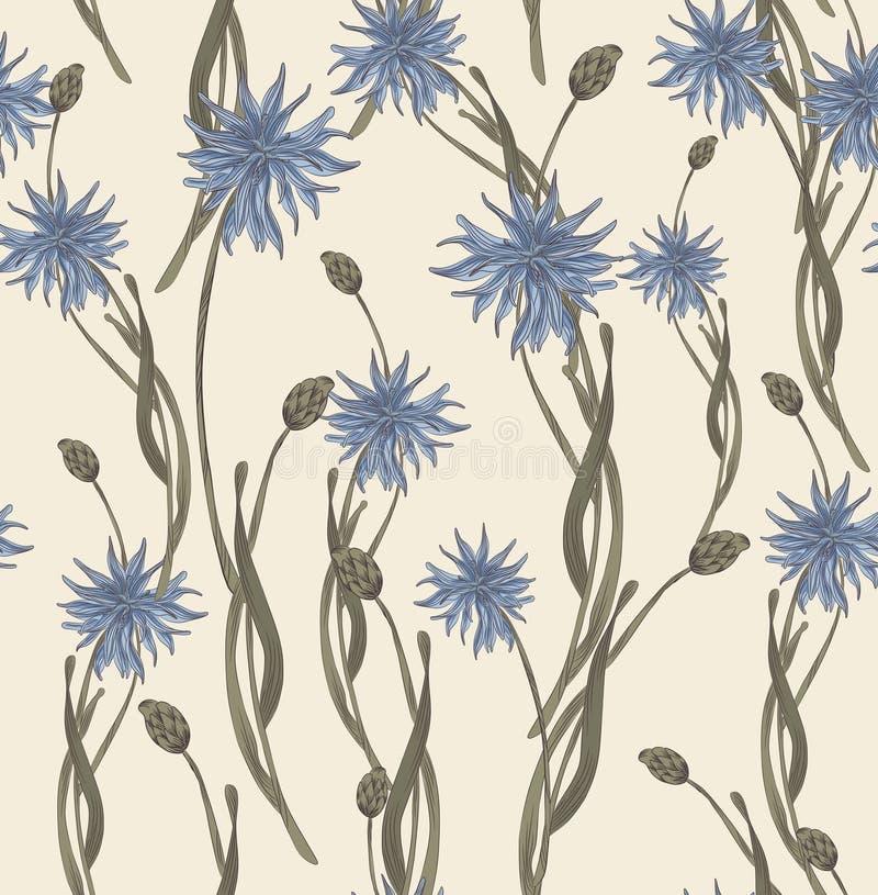 cornflowers illustration stock
