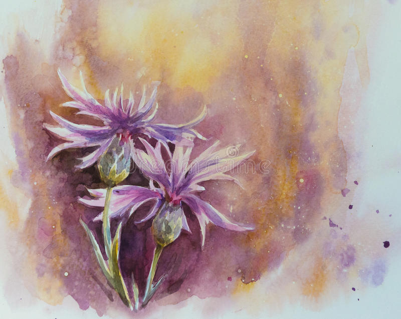 cornflowers illustrazione di stock