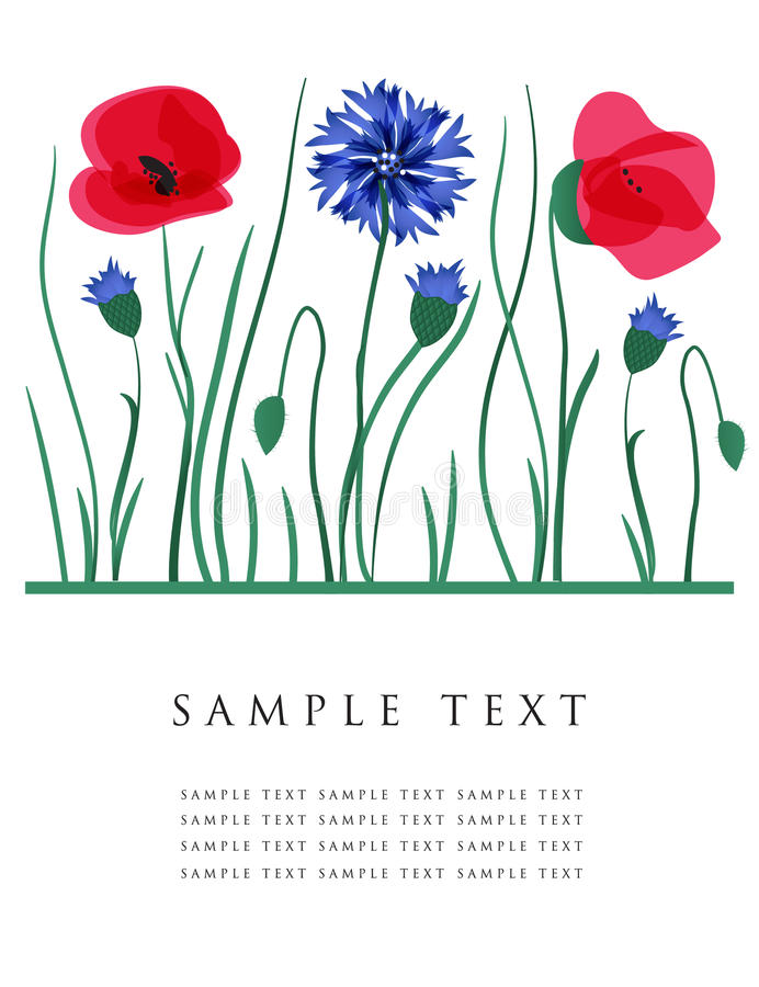 Free Cornflowers And Poppies. Vector Card. Royalty Free Stock Images - 15954379