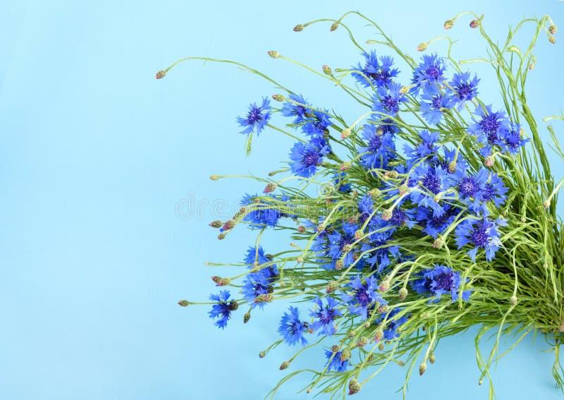 Cornflowers na błękitnym tle zdjęcie royalty free