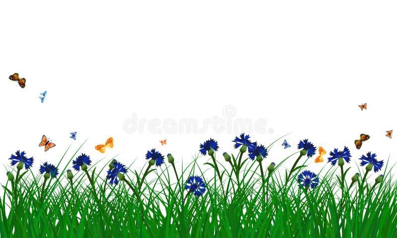 Cornflowers on summer meadow royalty free illustration