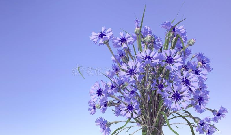 Cornflowers w niebieskiego nieba tle fotografia royalty free