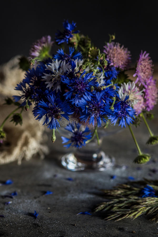 Cornflowers. Wild plants blue royalty free stock images