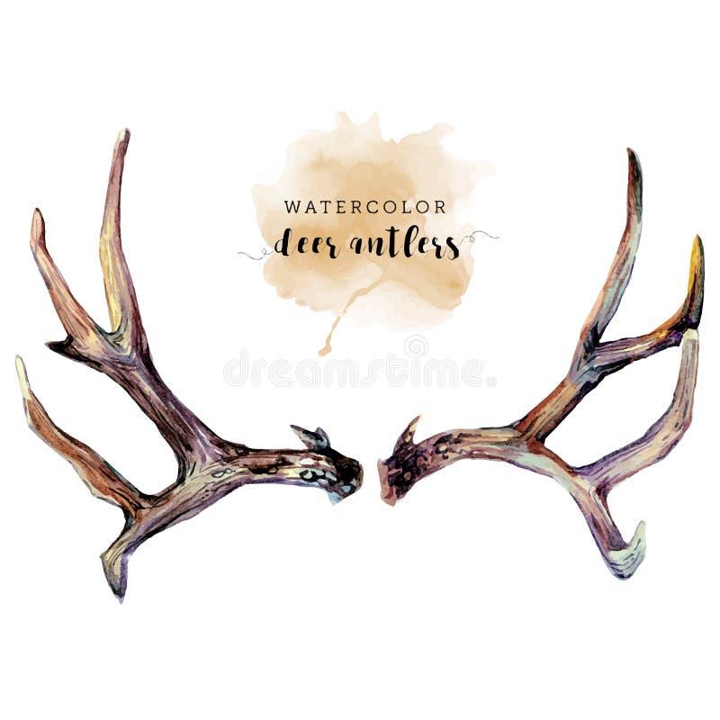 Corni dei cervi dell'acquerello illustrazione di stock