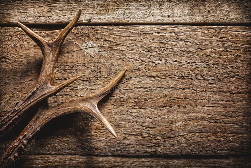 Corni dei cervi su superficie di legno fotografie stock