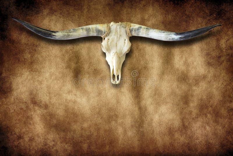 Corni di toro e lerciume del cranio con lo spazio della copia fotografie stock libere da diritti