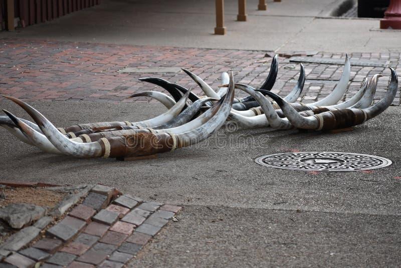 Corni sul marciapiede alle iarde delle azione di Fort Worth immagine stock libera da diritti