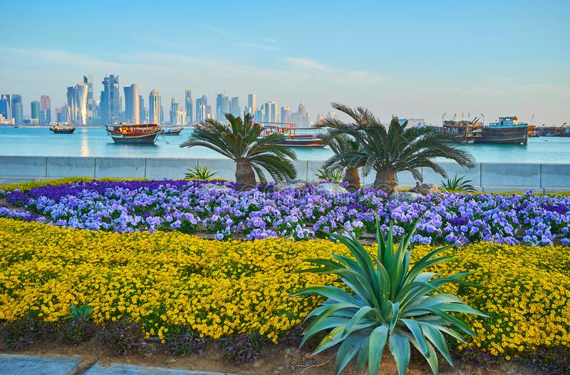 The flowers on Corniche embankment of Doha, Qatar. The Corniche embankment is decorated with beautiful flower beds and palm alley, stretching along the coast of stock images