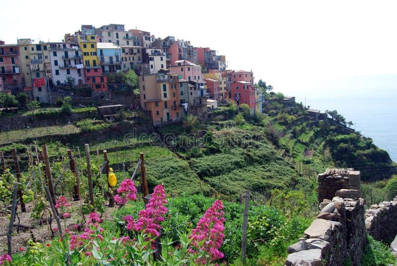Corniglia-Cinque Terre imagen de archivo libre de regalías