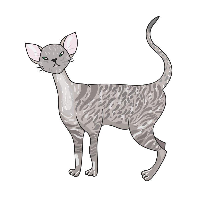 Cornish εικονίδιο Rex στο ύφος κινούμενων σχεδίων που απομονώνεται στο άσπρο υπόβαθρο Διανυσματική απεικόνιση αποθεμάτων συμβόλων διανυσματική απεικόνιση