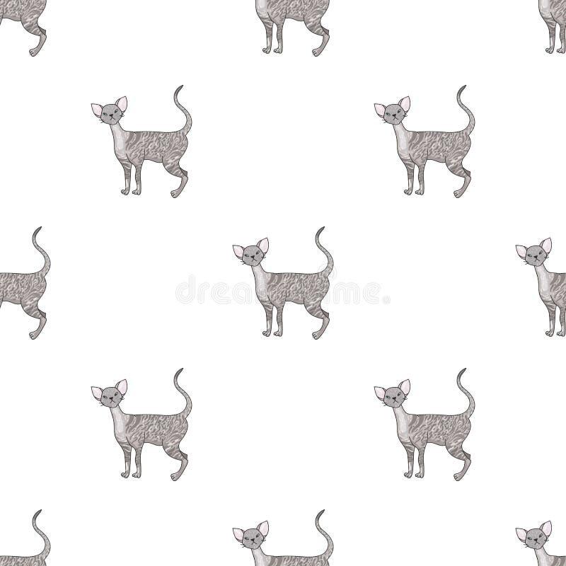 Cornish εικονίδιο Rex στο ύφος κινούμενων σχεδίων που απομονώνεται στο άσπρο υπόβαθρο Διανυσματική απεικόνιση αποθεμάτων συμβόλων απεικόνιση αποθεμάτων