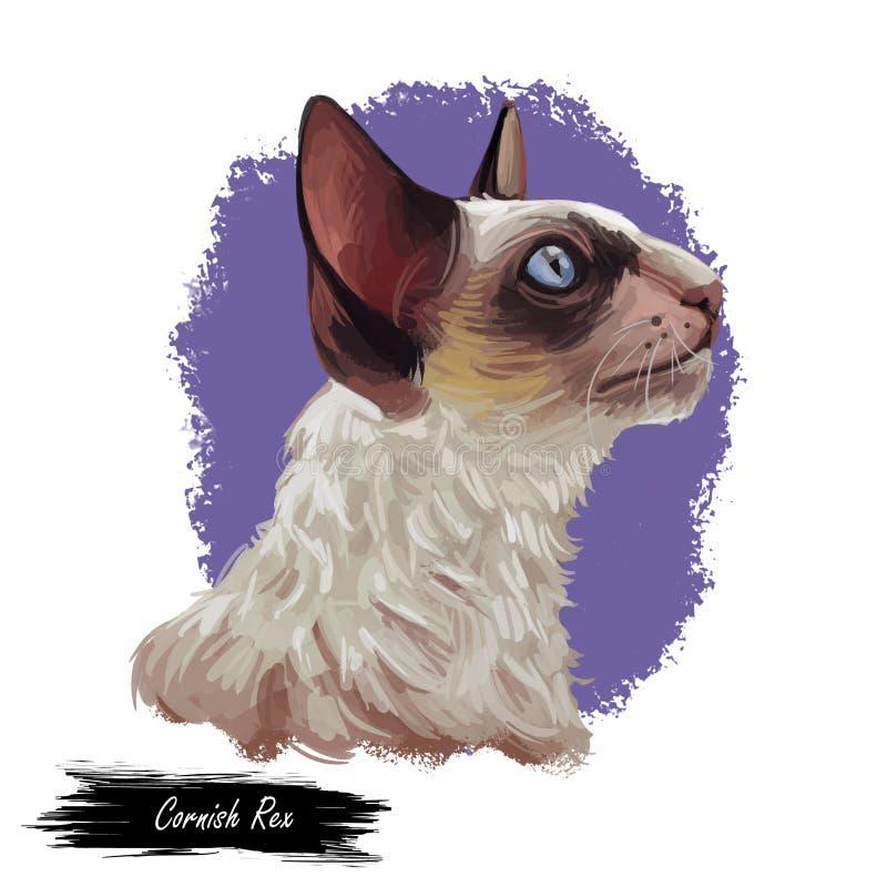 Cornish πορτρέτο γατών Rex που απομονώνονται, ψηφιακή τέχνη απεικόνιση αποθεμάτων