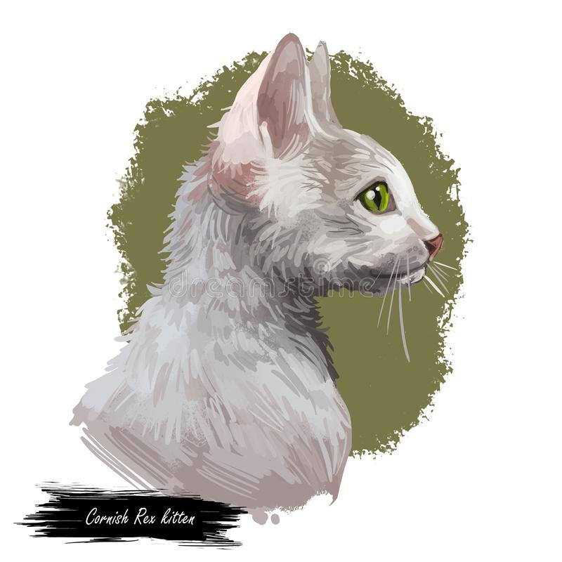 Cornish πορτρέτο γατών Rex που απομονώνονται, ψηφιακή τέχνη ελεύθερη απεικόνιση δικαιώματος