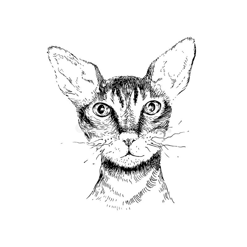 Cornish πορτρέτο γατών rex απεικόνιση αποθεμάτων