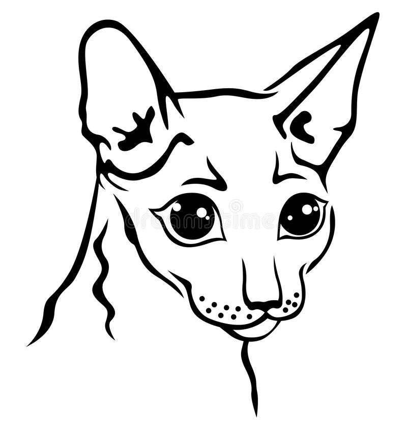 Cornish ρύγχος γατών Rex ελεύθερη απεικόνιση δικαιώματος