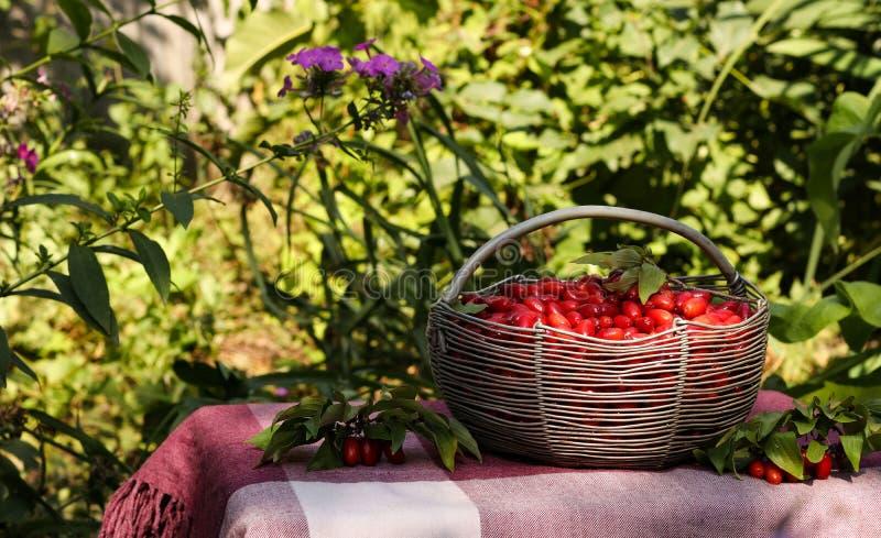 Corniso maduro em uma cesta do ferro em uma tabela no jardim foto de stock