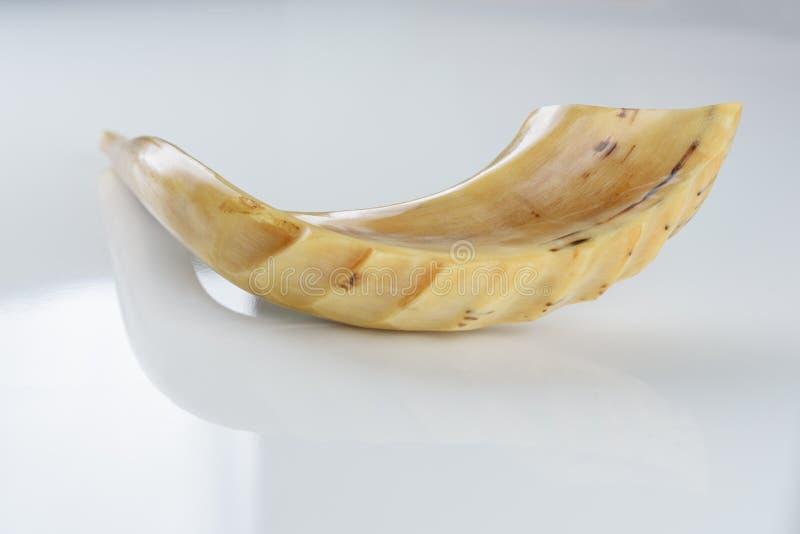 Corno dello Shofar su fondo bianco fotografia stock libera da diritti