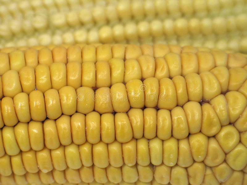 Corns. Corn from a close viewpoint royalty free stock image