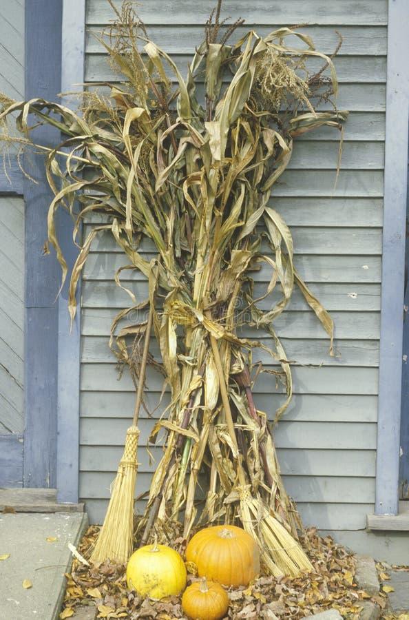 Cornstalks e zucche, Waterloo, New Jersey fotografia stock libera da diritti