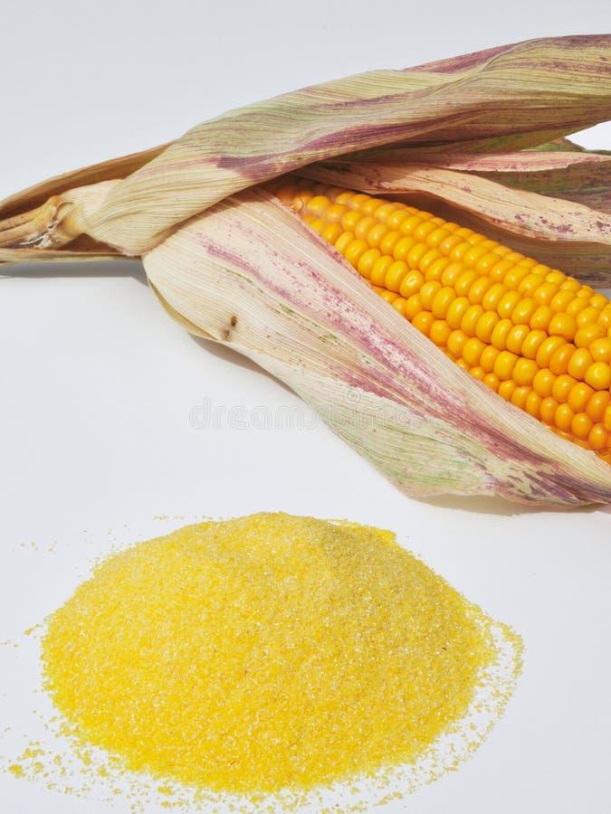 Cornstarch. Cornmeal reversed before a corncob stock photography