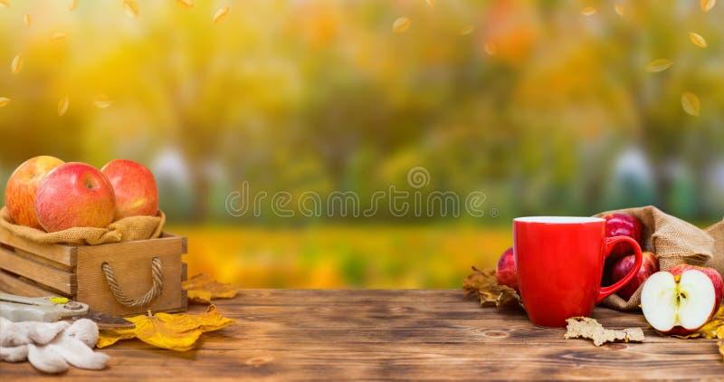 Cornucopia del raccolto di caduta Tazza del tè caldo della mela per la bevanda calda di stagione di autunno immagini stock