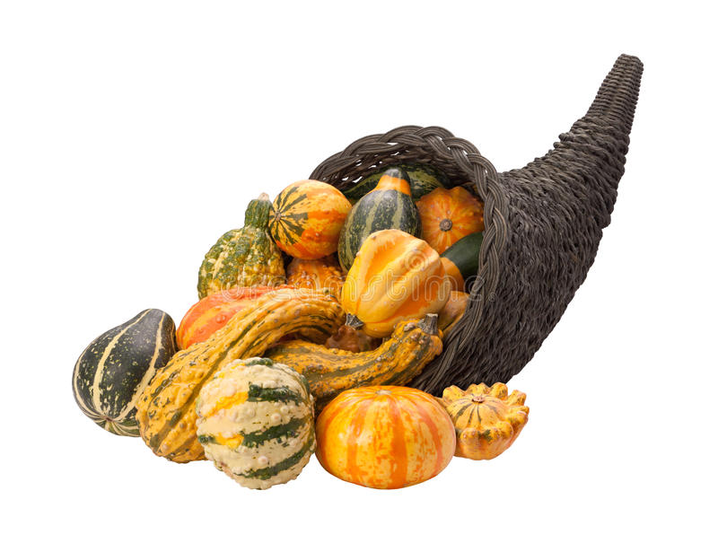 Cornucopia Gourds isolated with clipping path stock images