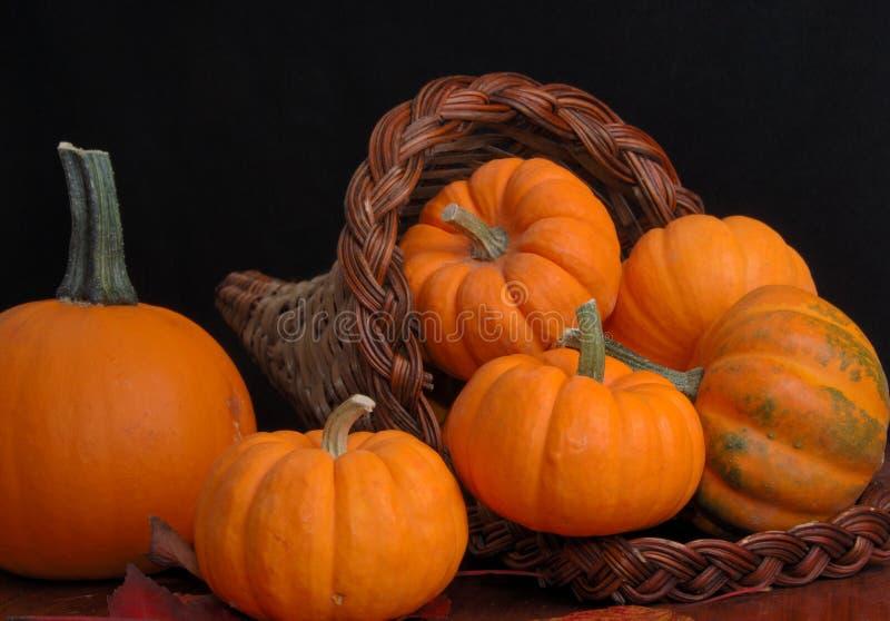 Cornucopia of pumpkins stock image