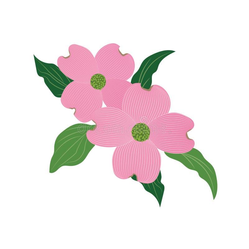 Cornus florida do corniso do rosa da flor da natureza ilustração do vetor