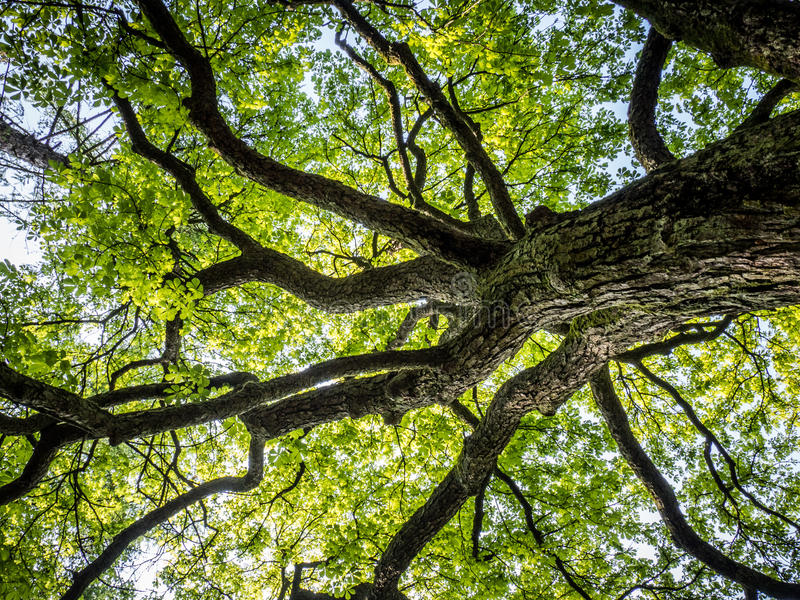 Coroa da árvore fotografia de stock royalty free