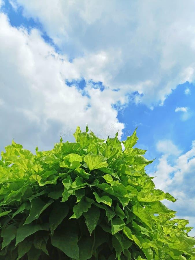 Coroa da árvore decorativa contra o céu foto de stock