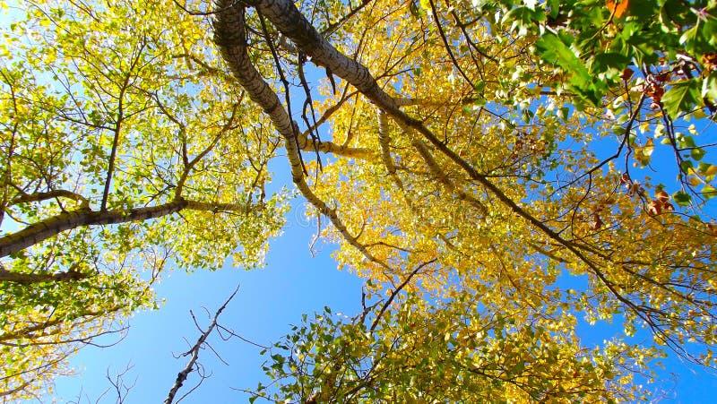 Coroa de árvores do outono fotografia de stock royalty free