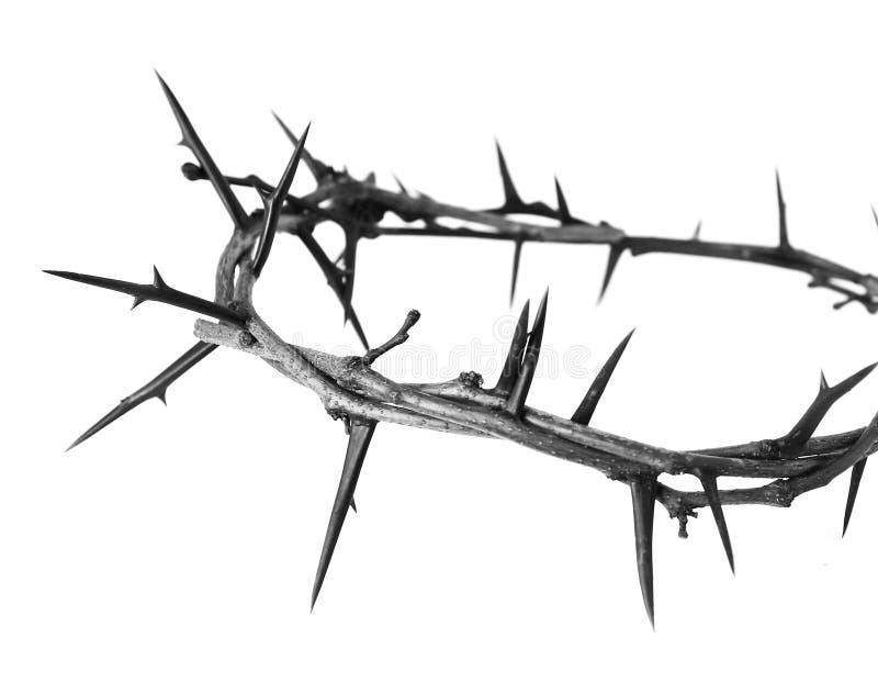 Coroa de espinhos fotografia de stock