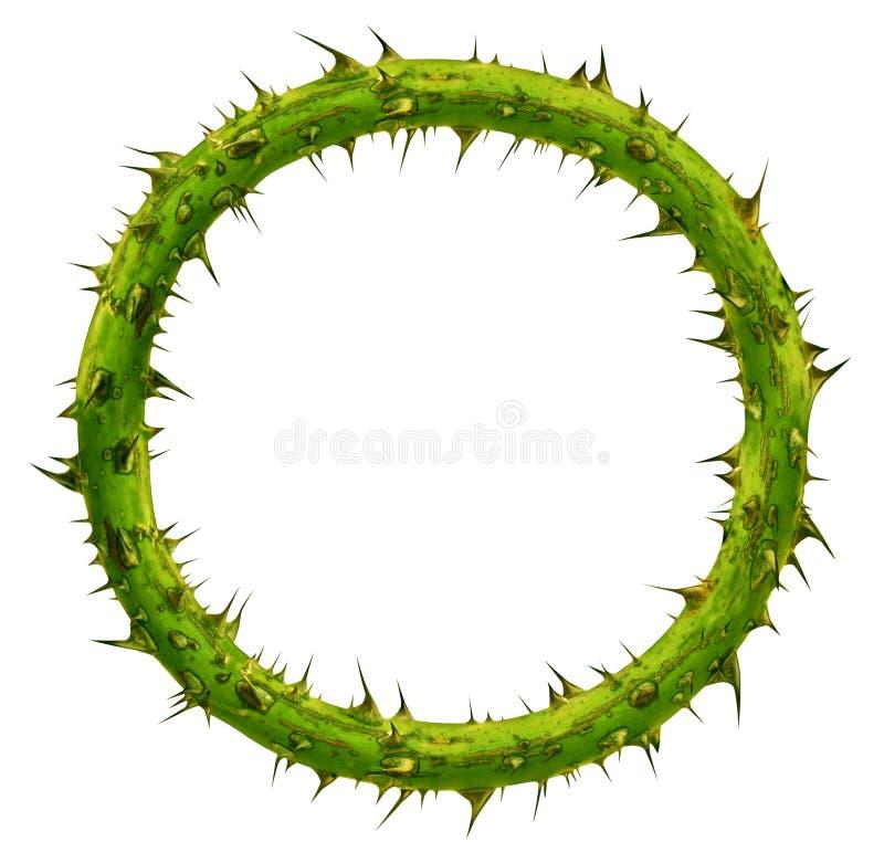 Coroa de espinhos imagem de stock