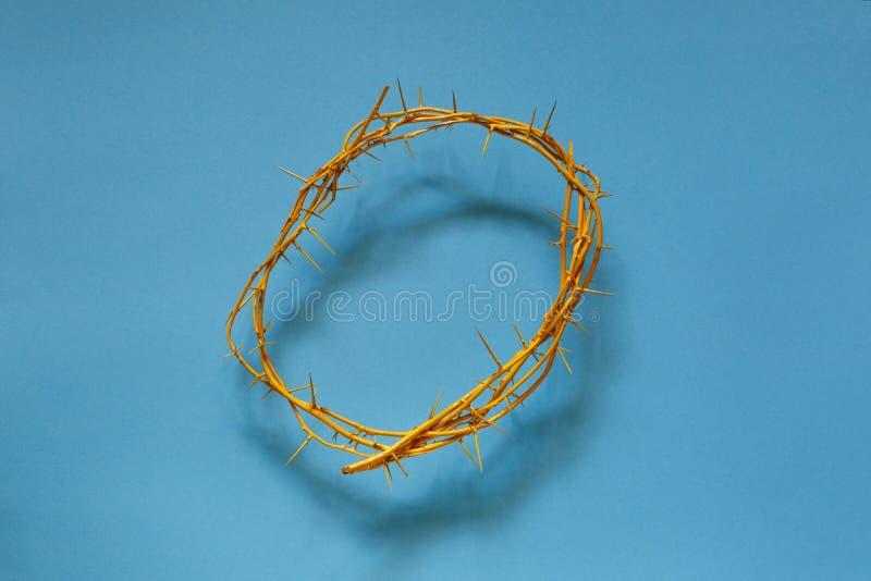 Coroa de espinhos amarela em um fundo azul, vista superior fotos de stock