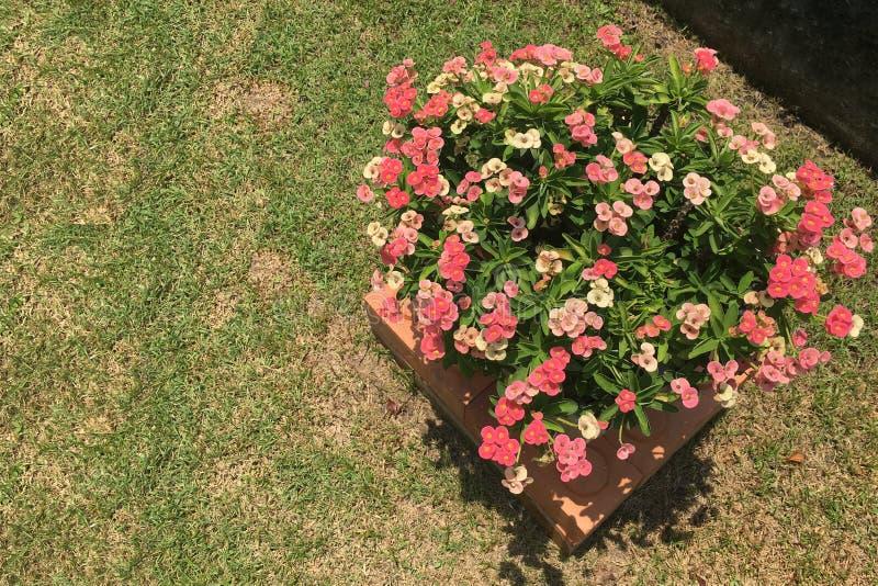 Coroa de vista superior de espinhos no fundo da grama, espaço da cópia foto de stock royalty free