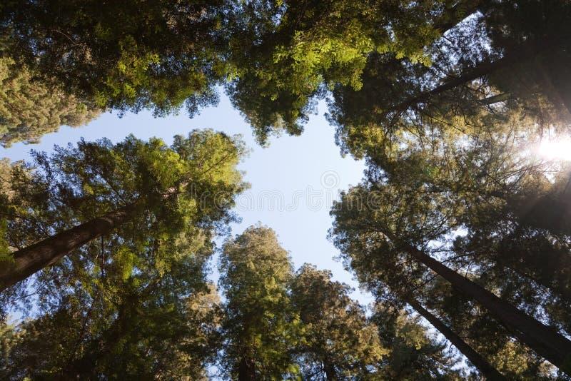 Corona de árboles fotos de archivo