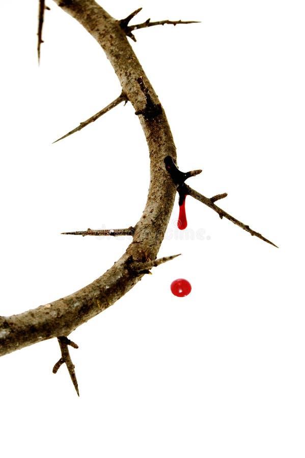 Corona de espinas imagen de archivo