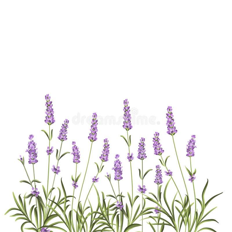 Corona dei fiori della lavanda illustrazione di stock