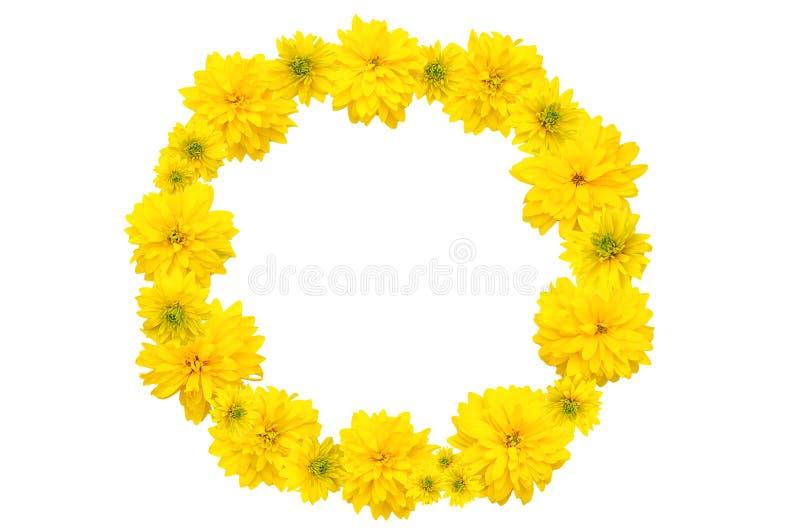 Corona dei fiori gialli di Heliopsis isolato fotografia stock libera da diritti