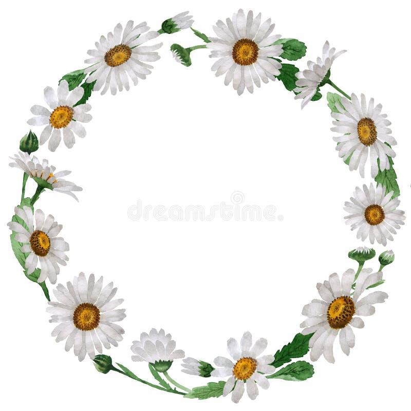 Corona del fiore della camomilla del Wildflower in uno stile dell'acquerello isolata illustrazione vettoriale