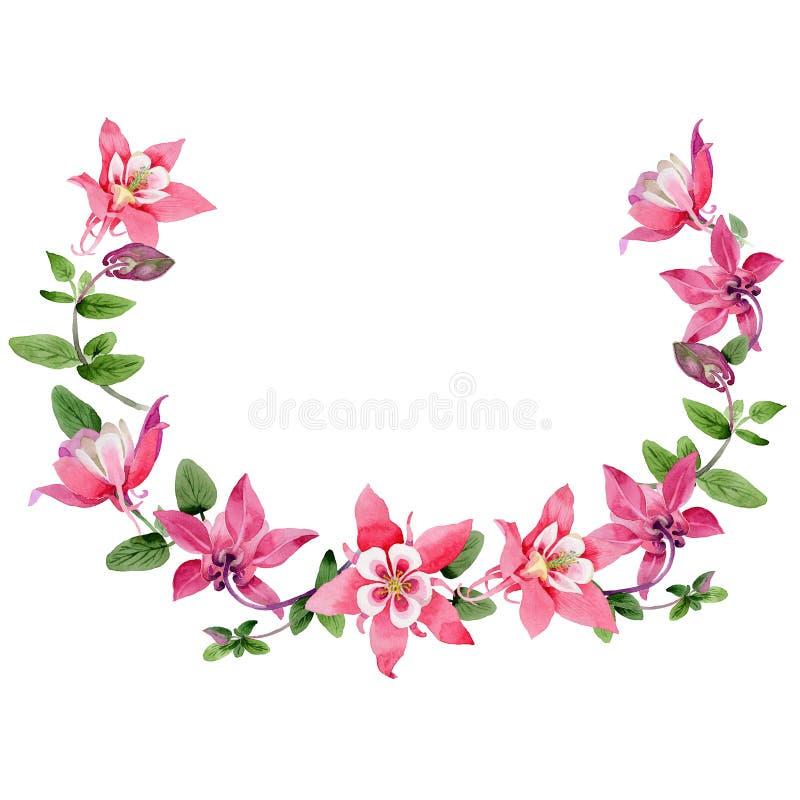 Corona del fiore di aquilegia del Wildflower in uno stile dell'acquerello illustrazione vettoriale