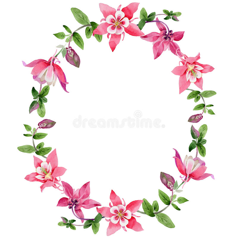 Corona del fiore di aquilegia del Wildflower in uno stile dell'acquerello illustrazione di stock