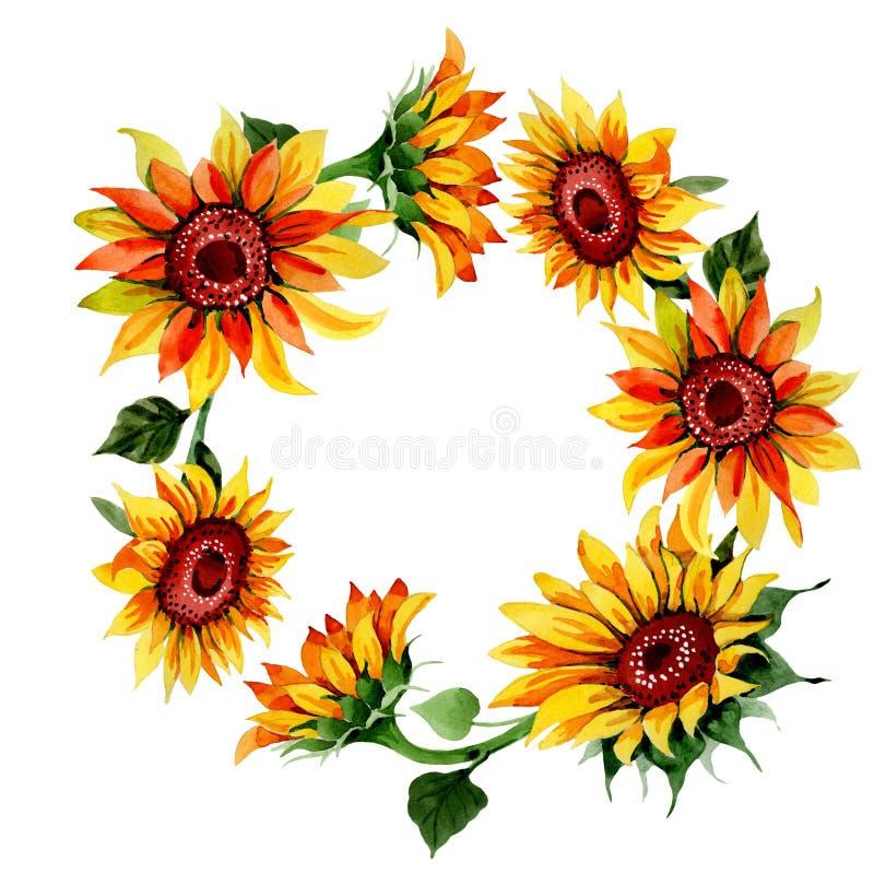 Corona del fiore del girasole del Wildflower in uno stile dell'acquerello illustrazione vettoriale