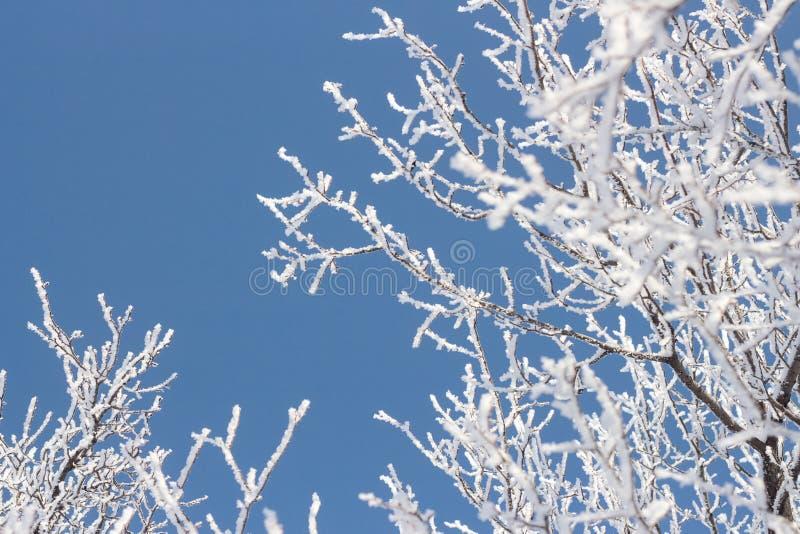 Corona del ghiaccio di gelo della neve di gelo invernale di un albero contro il cielo immagini stock libere da diritti