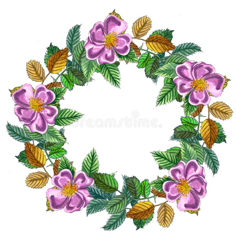 Corona dell'acquerello con il ramo della rosa canina, delle bacche rosse e delle foglie verdi illustrazione vettoriale