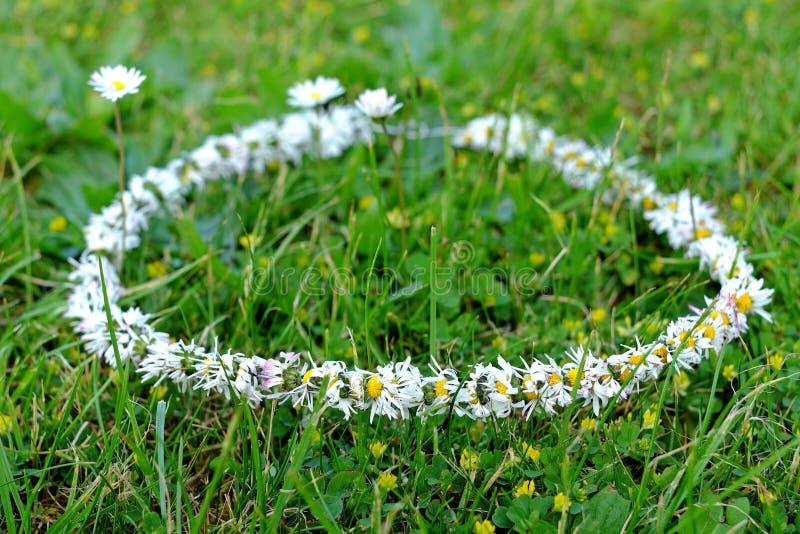Corona delle margherite sull'erba nel giardino fotografia stock libera da diritti