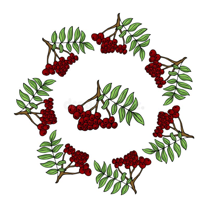 Corona di ashberry illustrazione vettoriale