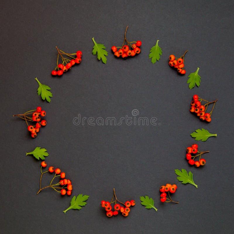Corona di autunno con le foglie e ashberry su fondo nero illustrazione vettoriale