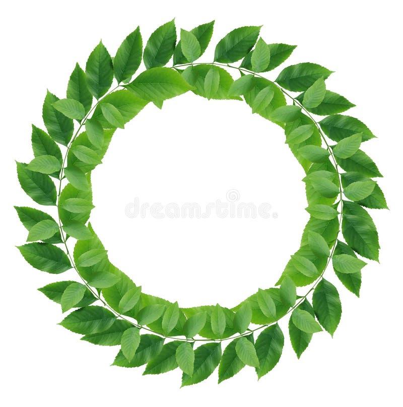 Corona di foglie verdi immagini stock