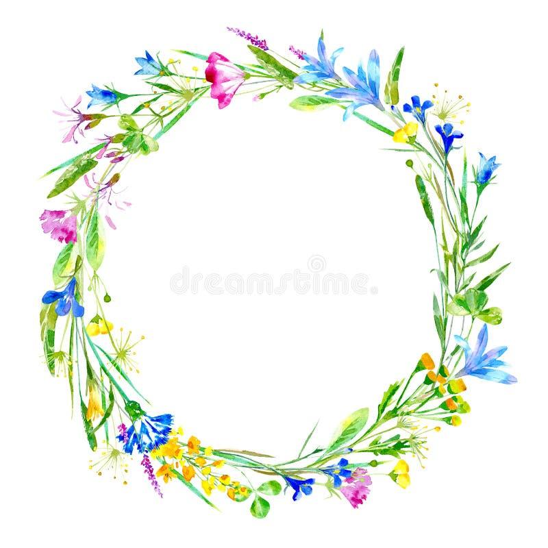 Corona di un fiordaliso, campanula, erbe, tanaceto, erica floreale illustrazione di stock